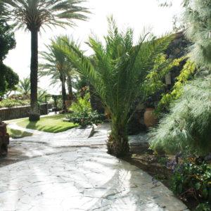 Accommodation in Tenerife - Banana Milk